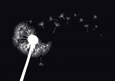 white dandelion loosing his integrity on wind- black background  Vector