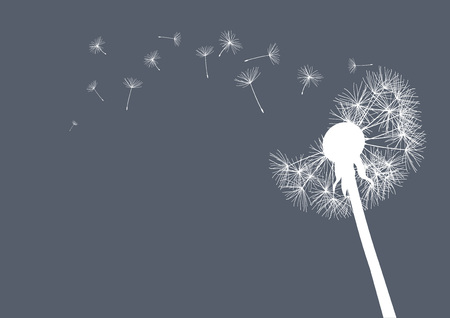 posterity: white dandelion on grey background