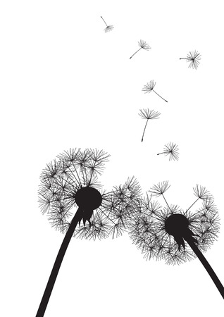 two black dandelions on white background- vector  Vector