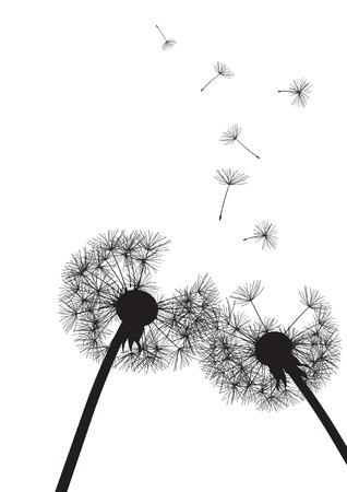 pistil: two black dandelions on white background- vector