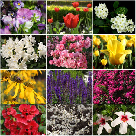 collection of colorful flowers  photo