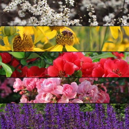 collection of colorful flower banners  photo