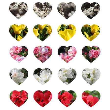 Valentine s card - flowers hearts on white background photo