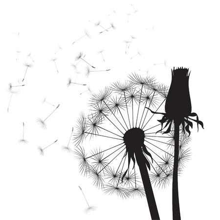 black and white vector dandelions  일러스트