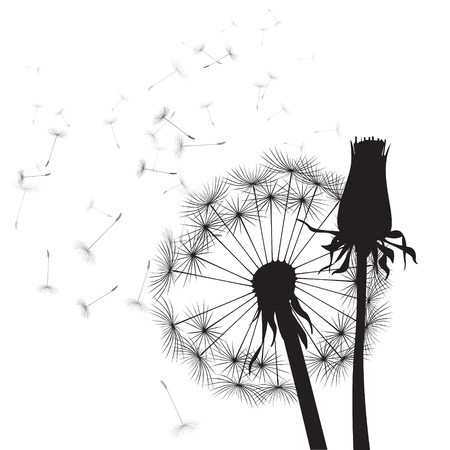 black and white vector dandelions  Illustration