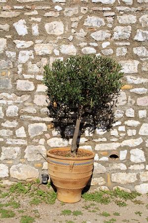 Plant in vintage terracotta flowerpot photo