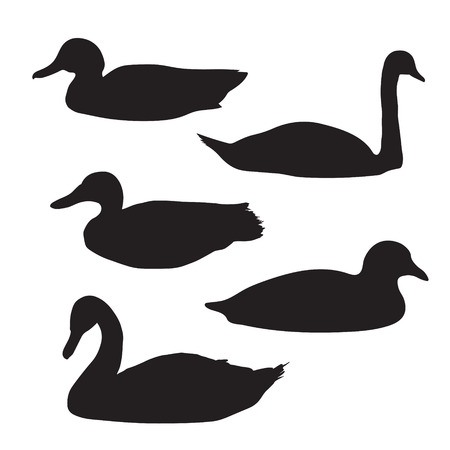 swimming swan: black silhouettes of birds: swans and ducks