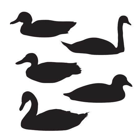 Schwarze Silhouetten der Vögel: Schwäne und Enten Standard-Bild - 37143426