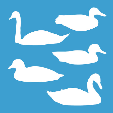 mute swan: white silhouettes of birds: swans and ducks