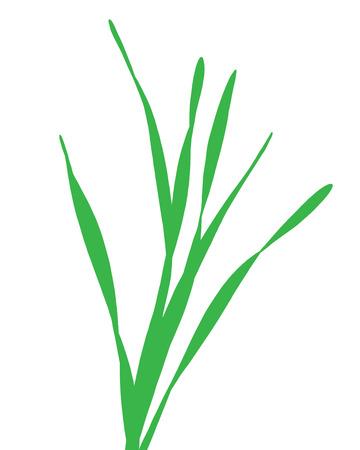 green blade of grass  イラスト・ベクター素材