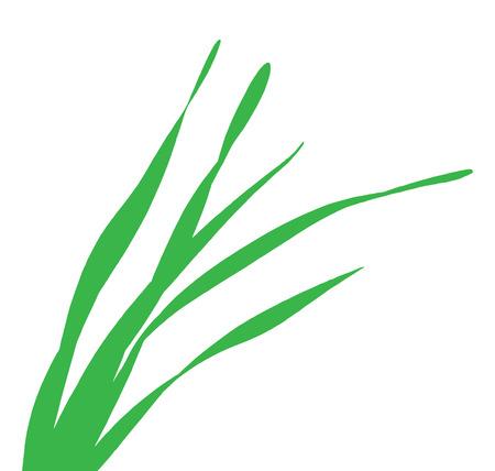 grass blade: green blade of grass Illustration