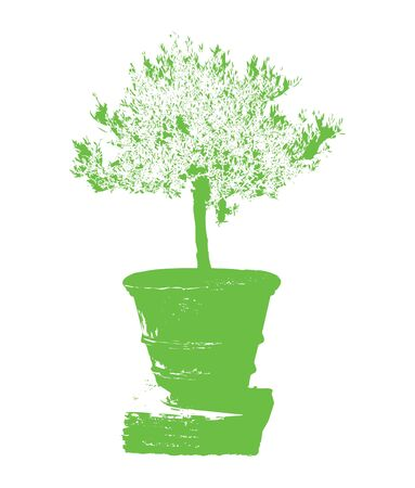 green olive: green olive tree in a clay amphora