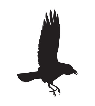 crow: Black silhouette of raven Illustration