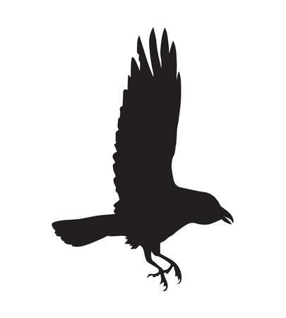 corvo imperiale: Silhouette nere di corvo