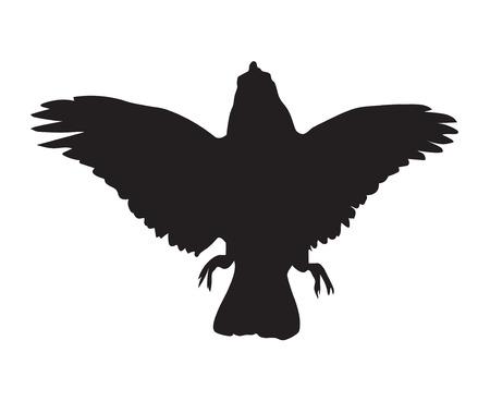 cuervo: Negro silueta de cuervo