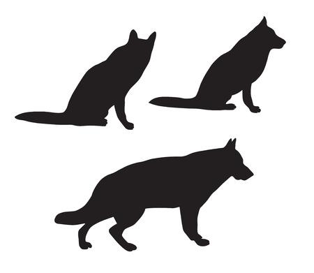 german shepherd dog: Black silhouettes of German Shepherd dog Illustration