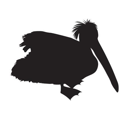 Black silhouette of a pelican