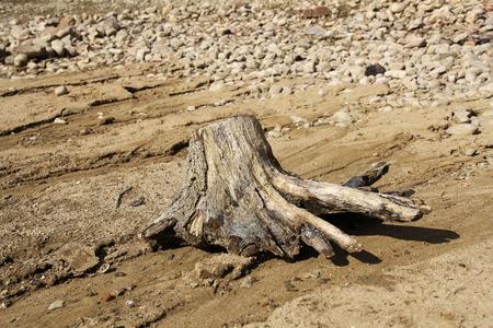 bough: bough on rocky beach
