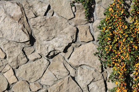 creeping plant: stone wall and creeping plant