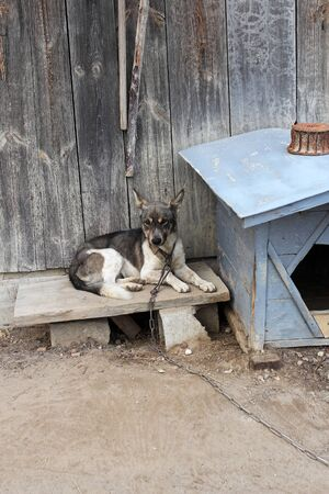 kennel: sad dog on chain laying next to kennel