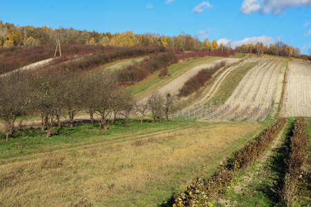 orchards: rural landcape, orchards on the hill Stock Photo