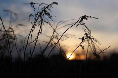 setting  sun: twigs against setting sun Stock Photo
