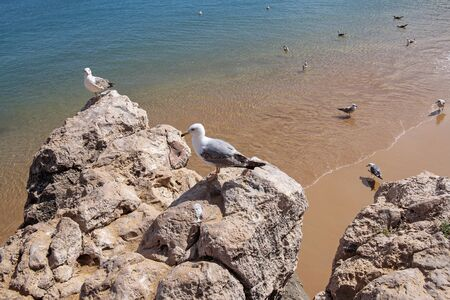 gentleness: seagulls on the cliff in Cascais, Portugal