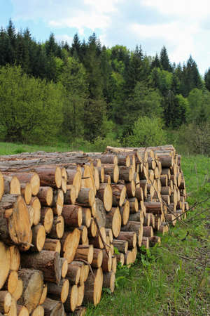 stockpile: pile of wooden logs, forest in the background