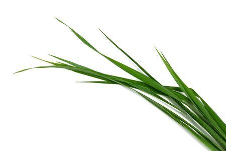 grass blade: blade of grass on a white background