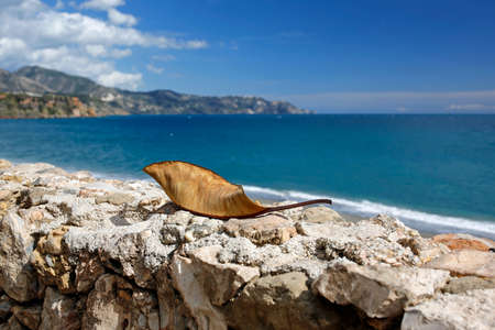 nerja: closeup of dry leaf with a beautiful turquoise sea in the background
