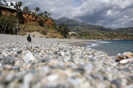 nerja: beautiful empty beach with pigeon Stock Photo