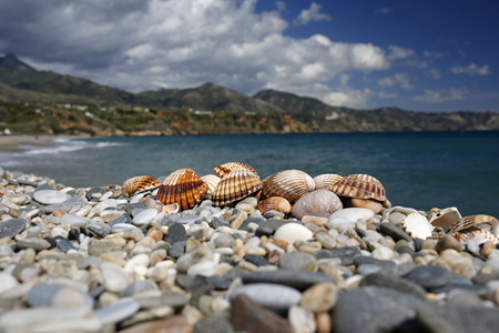 nerja: closeup of seashells on the beautiful summer beach