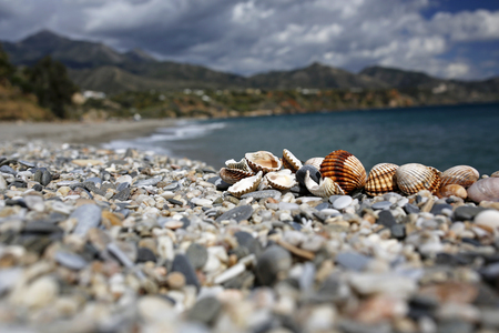 closeup of seashells on the beautiful summer beach