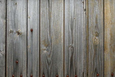 Old wooden panels with nits