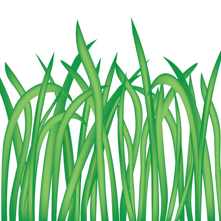 blades of grass isolated on white background- vector illustration