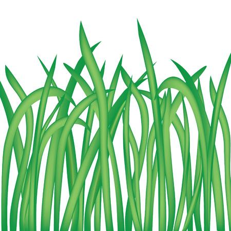 Lames d'herbe isolé sur fond blanc- illustration vectorielle Banque d'images - 85387320