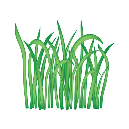 blades of grass isolated on white background- vector illustration Illustration