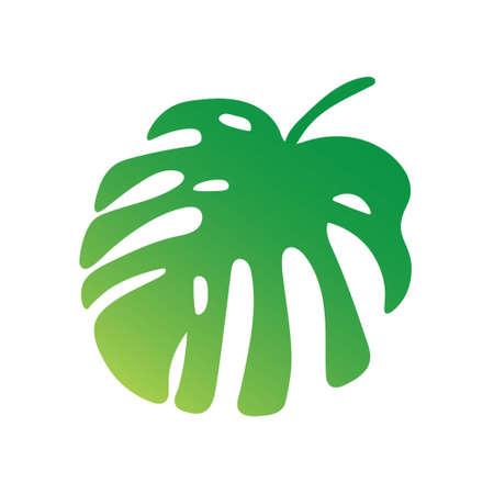 palm tree leaf, Monstera tropical plant- vector illustration