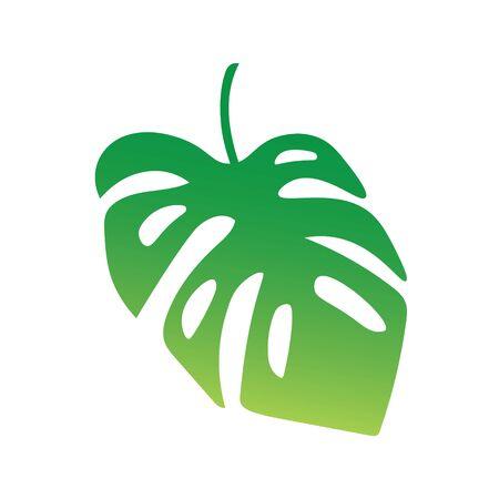 Palm tree leaf, Monstera tropical plant vector illustration