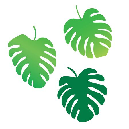 Palm tree leaves, Monstera tropical plant- vector illustration Illustration