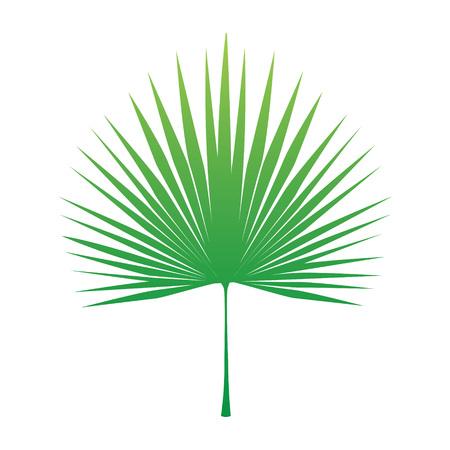 tropical palm tree leaf- vector illustration