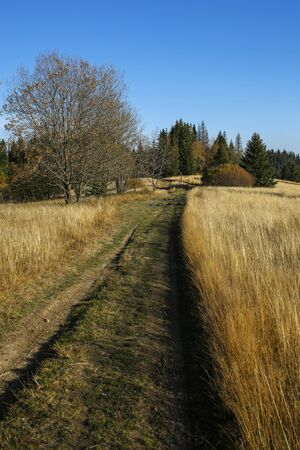 path in autumn field in Gorce Mountains, Poland Banque d'images