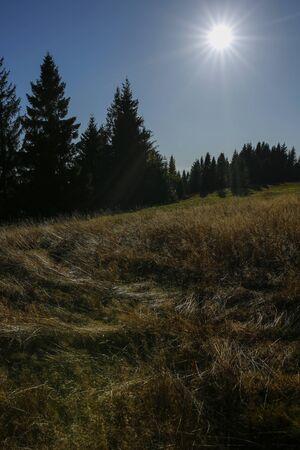 sun rays over autumn, mountain meadow