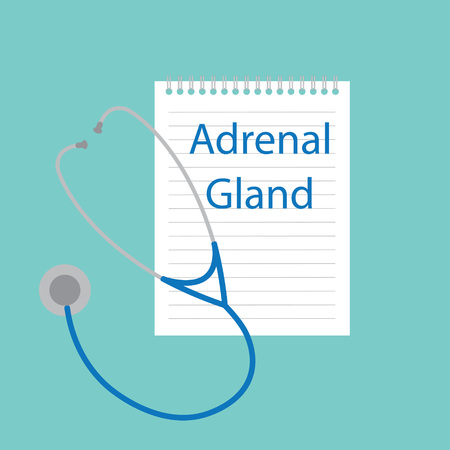 Adrenal gland written in a notebook- vector illustration