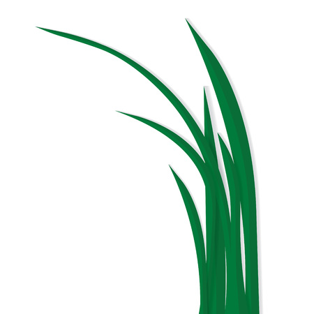 blades of grass isolated on white background- vector illustration  イラスト・ベクター素材