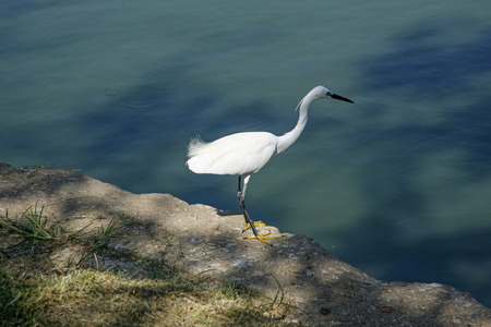 closeup of white heron on the shore of the lake Imagens