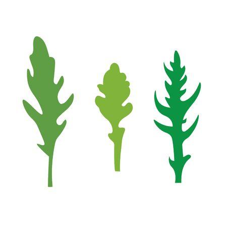 arugula leaves icon- vector illustration