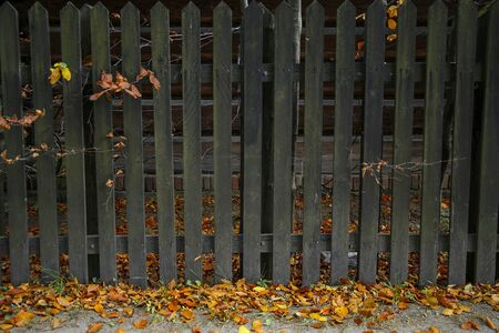 old wooden fence in autumn scenery Stock Photo