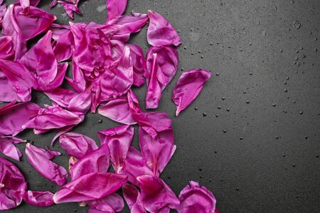 composition of pink peony flower petals on shiny black background, copy space