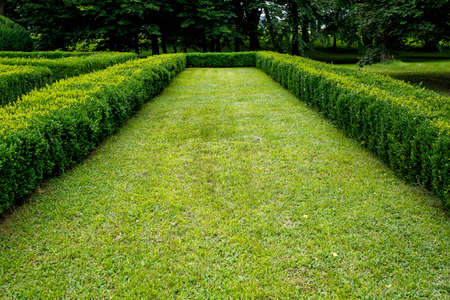 lawn between green trimmed bush hedge in the park